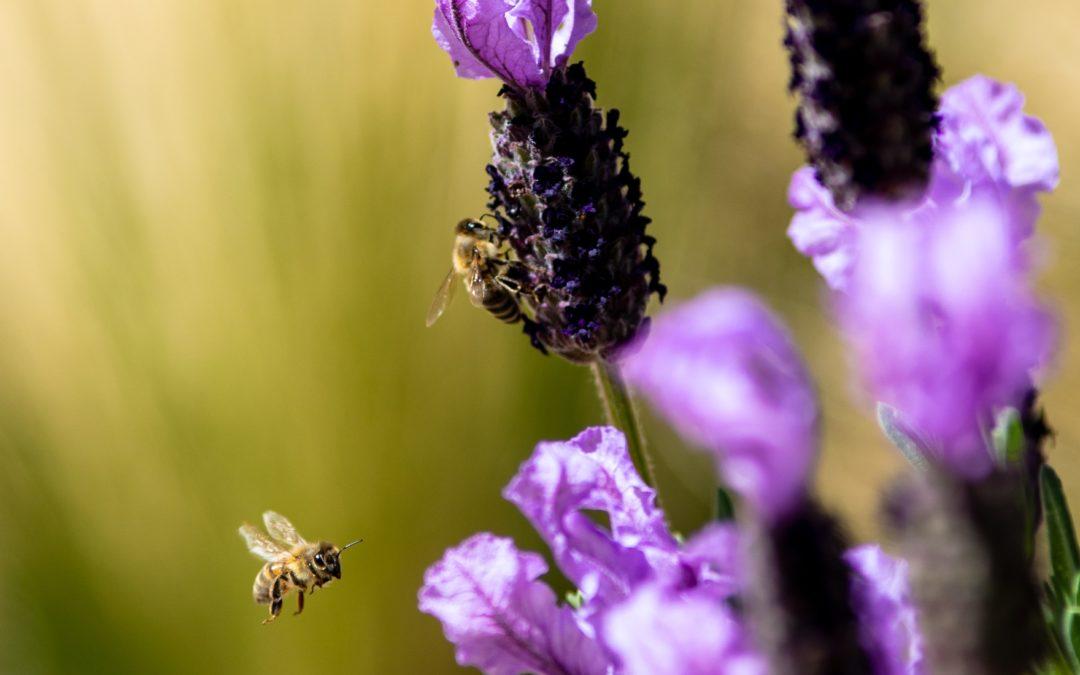Videoblog: WAS WENN die Bienen eine Lösung gegen die Pleitewelle und Arbeitslosigkeit gefunden haben?